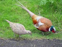 Половые различия у разных животных возникают по-разному