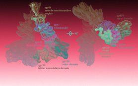 ГМ-лимфоциты победили ВИЧ в культуре клеток и селезенке мышей