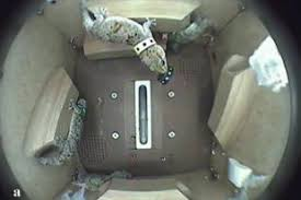 Российские ученые изучили игровое поведение гекконов в космосе