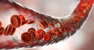 Система свёртывания крови уничтожает бактерий