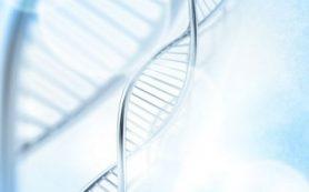 Как новые петли в ДНК помогают создавать разнообразные антитела