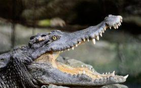 Чем питались древние крокодилы?