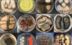 Ученые из США провели первое углубленное исследование морских грибов