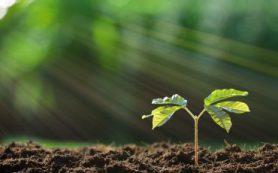 Как растения «строят» свой первый хлоропласт
