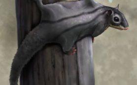 Новые древесные млекопитающие юрского периода из Сибири