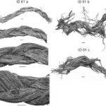 Люди верхнего палеолита умели плести верёвки и корзины