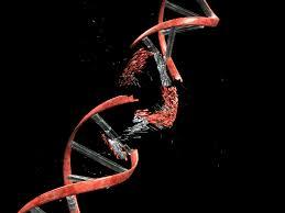 Среди причин старения ученые обнаружили двунитевые разрывы в ДНК