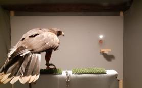 Хищные птицы отличились супербыстрым зрением