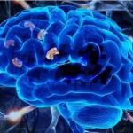 В МГППУ исследовали механизмы хранения смысла глаголов в памяти
