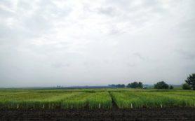 Земледельческая территория в Сибири расширится из-за изменения климата