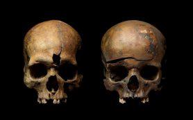 Генетики установили родственные связи жертв массовой резни при разорении Ярославля Батыем в 1238 году