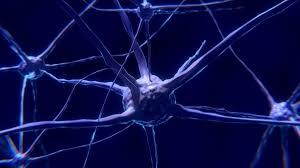 Человеческие нейроны прижились в мышином мозге