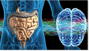 У кишечной микрофлоры сложные отношения с «кишечным гриппом»
