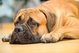 Собачий мозг настроен на грубый подсчёт