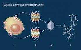 Биофизики заменили мыло на нанодиски в борьбе за честные белковые структуры