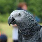 У попугаев нашли альтруизм