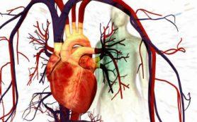 Исследователи ИИФ УрО РАН, УрФУ и их коллеги из США создали компьютерную модель механики сердца