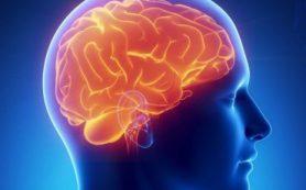 Исследователи БФУ в составе международной группы нашли новые регуляторы кровоснабжения мозга