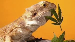 В мозге рептилий нашли звериную часть