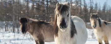 Как лошади, олени и бизоны могут помочь Арктике