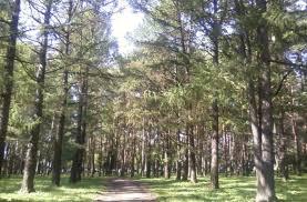 Ученые выясняют, какие деревья лучше всего борются с загрязнением воздуха