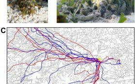 Раки-богомолы нашли дорогу домой с помощью интеграции пути