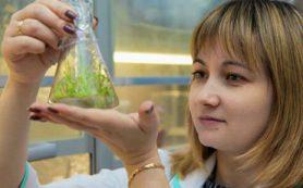 Исследователь БФУ совместно с коллегами из Китая предложила новую технологию получения растительных аналогов мяса