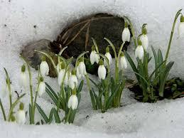 Чем пахнет весна