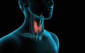 Щитовидная железа: профилактика заболеваний