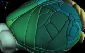 Создана новая полная 3D-карта мозга мыши
