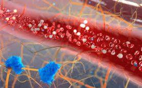 Новый коронавирус поражает кишечные клетки