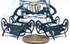 Разработан мощный и ловкий робот размером с таракана