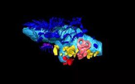 Палеонтологи РФ реконструировали мозг динозавра