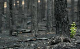 Открытие ученых ТюмГУ и ИПЭЭ РАН повысит точность глобальных моделей изменения климата
