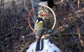 RFID-метки помогли автоматизировать сбор снимков для распознавания птиц