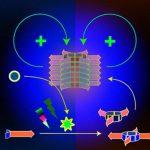 Химики создали способную к протометаболизму систему