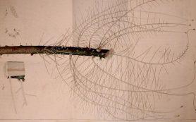 Отношения с грибами оказались главным фактором роста корней