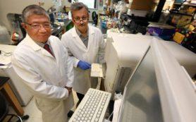 Антитела против сахара и брахитерапия: мощная комбинация против рака шейки матки
