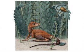 Обнаружен крошечный предок динозавров и птерозавров