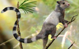 Полярный реликт эпохи динозавров: новый род млекопитающих из мезозоя Якутии