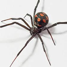 Сколько ног было у общего предка пауков и насекомых