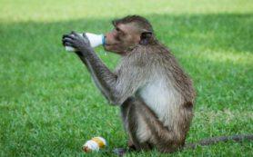 В Сколтехе проследили эволюцию млекопитающих по липидному составу их молока
