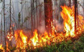 97 % лесных пожаров возникает по вине человека