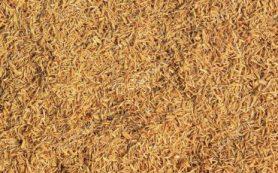 Рисовая шелуха поможет определить редкоземельные металлы