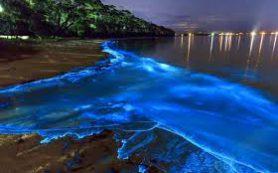 Светящиеся моря все же существуют