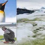 Ученые показали, как Антарктика может стать зеленой
