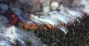 «Зомби-пожары» в Арктике поставили рекорд парниковых выбросов