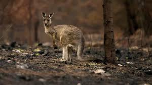 WWF рассказал о коллапсе дикой природы