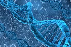У человека нашли гены регенерации