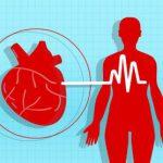 Новое исследование опасной патологии сердца поможет в борьбе с аритмиями